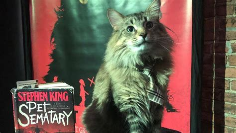 Important PSA: The Cats Who Played Church in 'Pet Sematary