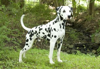 List of the most dangerous and fiercest 10 dogs in the