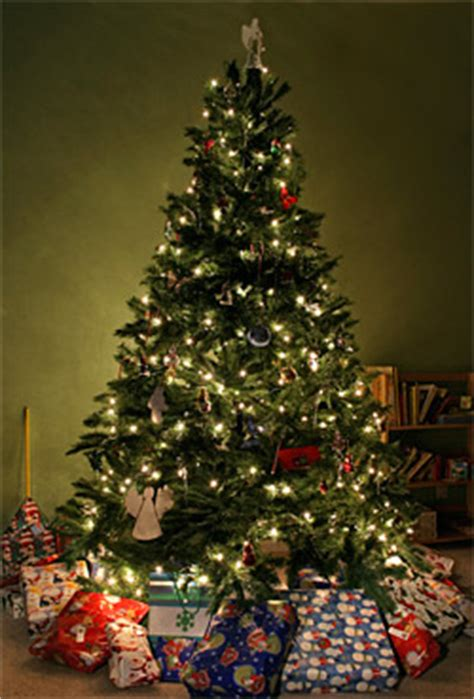 The Christmas Countdown: Places to buy a Christmas tree in