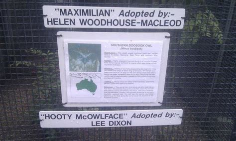 Hooty McOwlface is the greatest owl name ever   Lee dixon