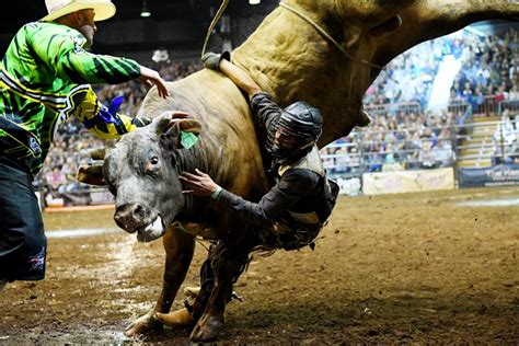 Outdated bull riding event unethical and inhumane - RSPCA